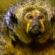 أطلس الحيوان   القردة